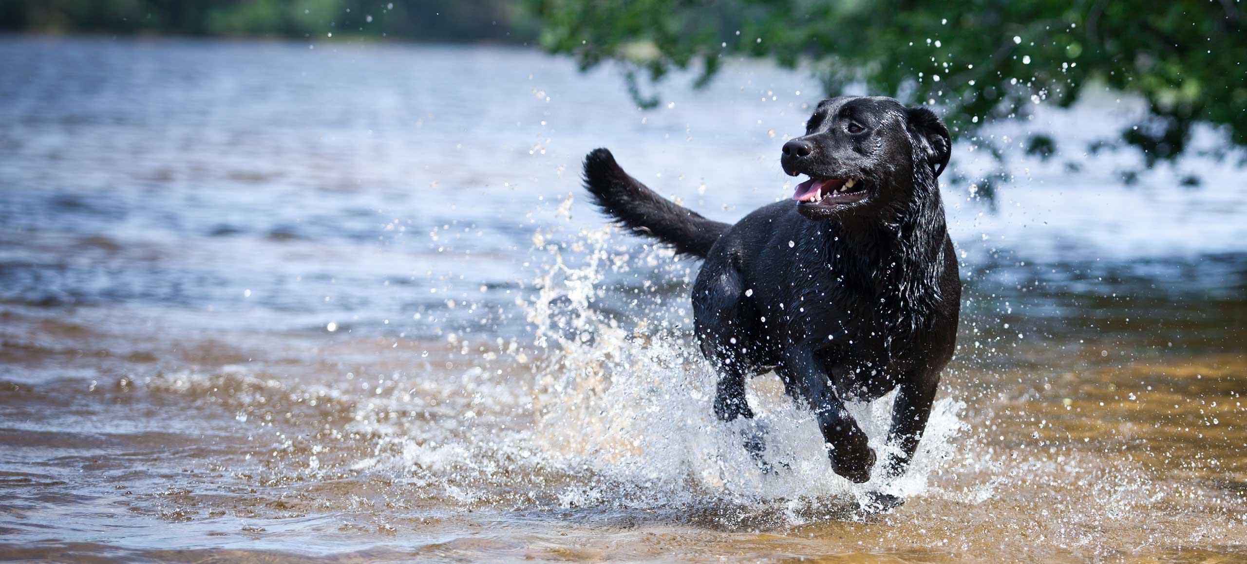 Autarky -hondenvoeding - volwassen honden - kip - zalm